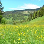 Difficult to beat an alpine meadow in full bloom after a hard time in the mountains