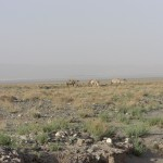 Gobi A place for camels not people Camo